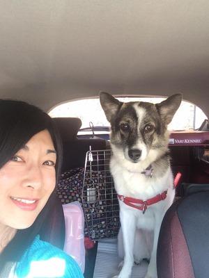 犬とドライブ しつけ 埼玉