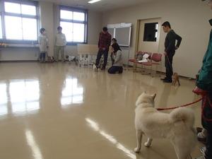 愛護センター 躾教室 戸田美由紀