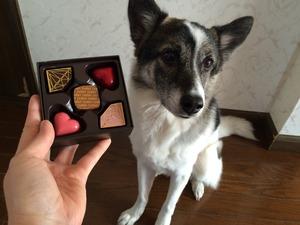 チョコレート バレンタイン 愛犬と