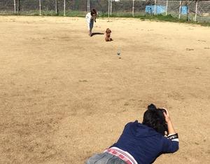 プードルスタイル モデル犬 躾
