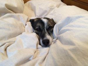 犬の寝床 正しいしつけ方