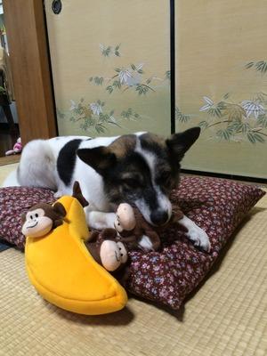 知育おもちゃ 犬用