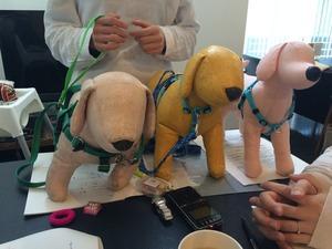 テリントンTタッチ 犬トレーニング