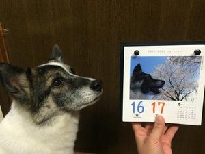 日めくりカレンダー 犬 高見沢