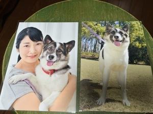 愛犬とツーショット デジカメ撮影