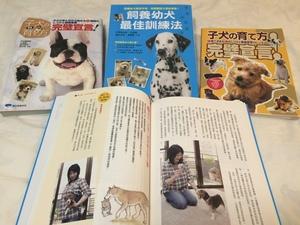 子犬の育て方完璧宣言 戸田