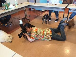 カメラマン 犬撮影 躾