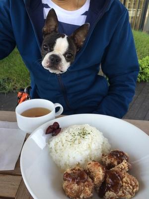 ドッグカフェ マナー 犬のお行儀