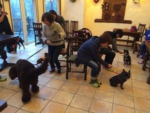 犬と一緒にゲーム