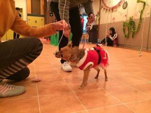 犬のクリスマス会