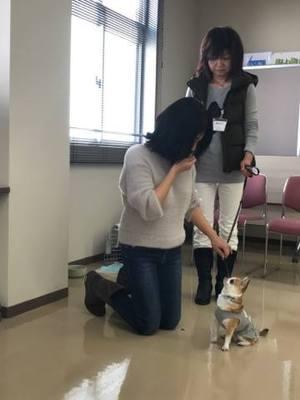 チワワ アシスタント犬