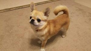 小型犬MIX しつけ