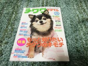 チワワスタイル モデル犬