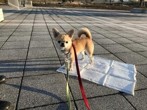 犬とドライブ 遠出する犬