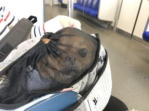 電車に乗る犬 上手に乗せるには