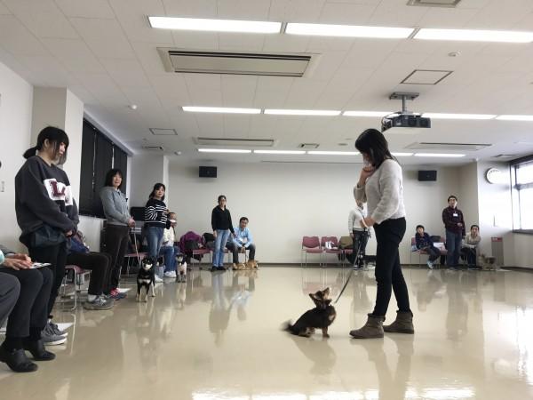 愛護センター 犬のしつけ教室