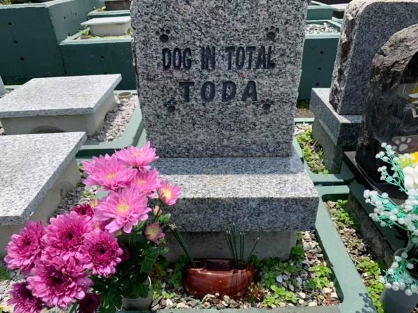 愛犬の墓参り