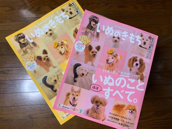 いぬのきもち 11月号発売