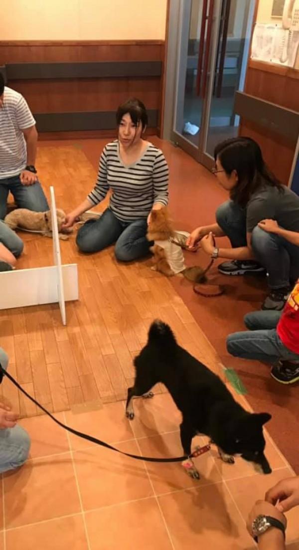 犬種バラバラ