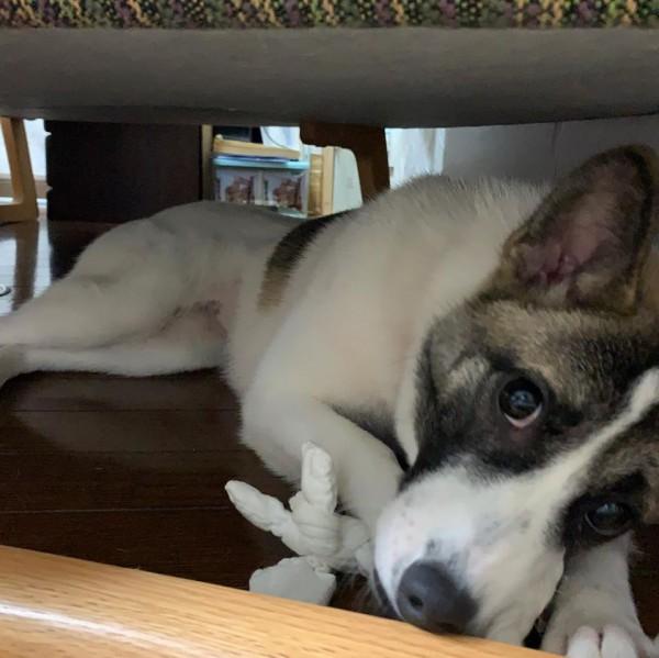 秘密基地を見つけた犬