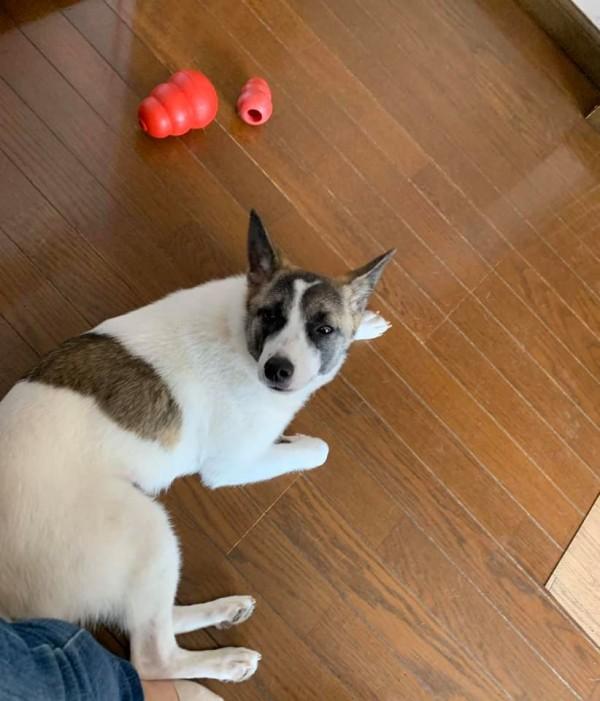 犬用オモチャに一旦おびえる犬