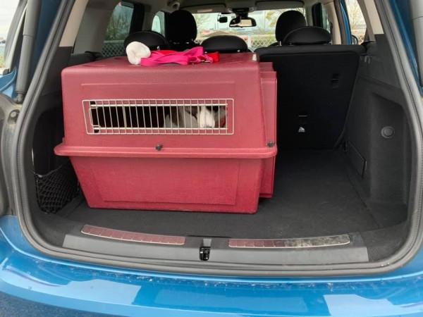 愛犬を車に乗せるなら