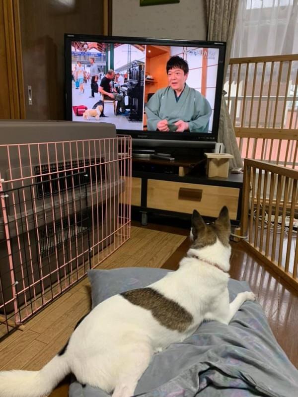 テレビの中の犬に反応しちゃう?