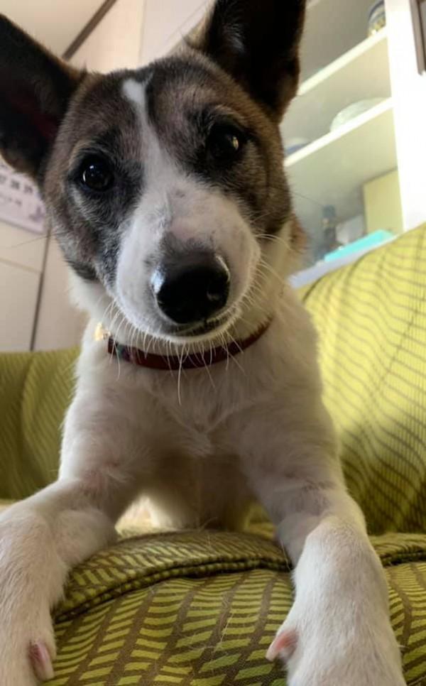 シニア犬との生活について・・・