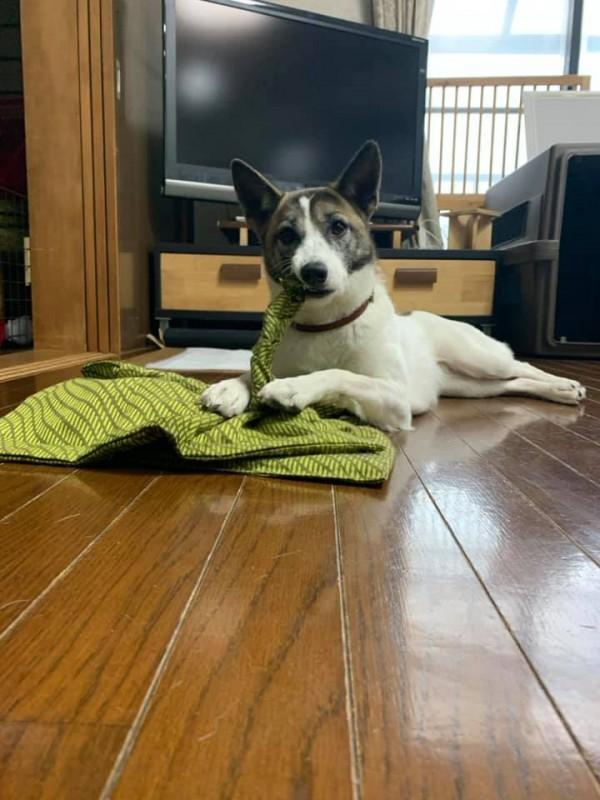シニア犬のケアセミナー開催決定!!