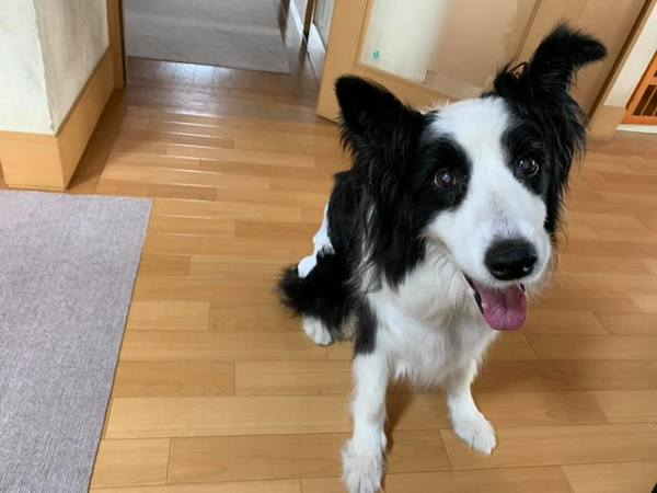幸せなシニア犬に会ってきた!