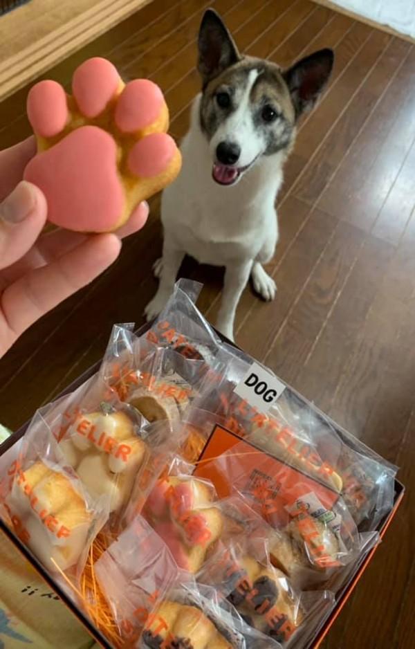 即食べしない犬。