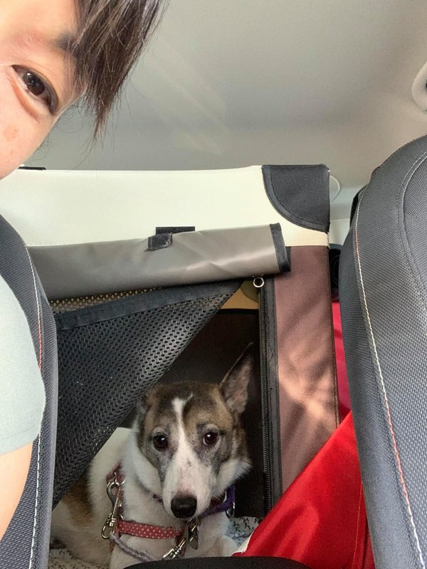 ドライブ中の愛犬はどの席に乗る?